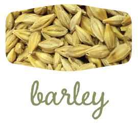 green-barley-2