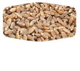 wheat-home-3