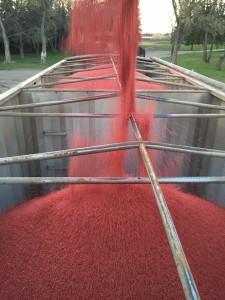 Galloway Seeds Treated Seed